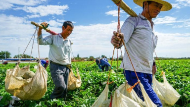 Xinjiang's new frontier: Rural e-commerce shining bright in China's sunny northwest